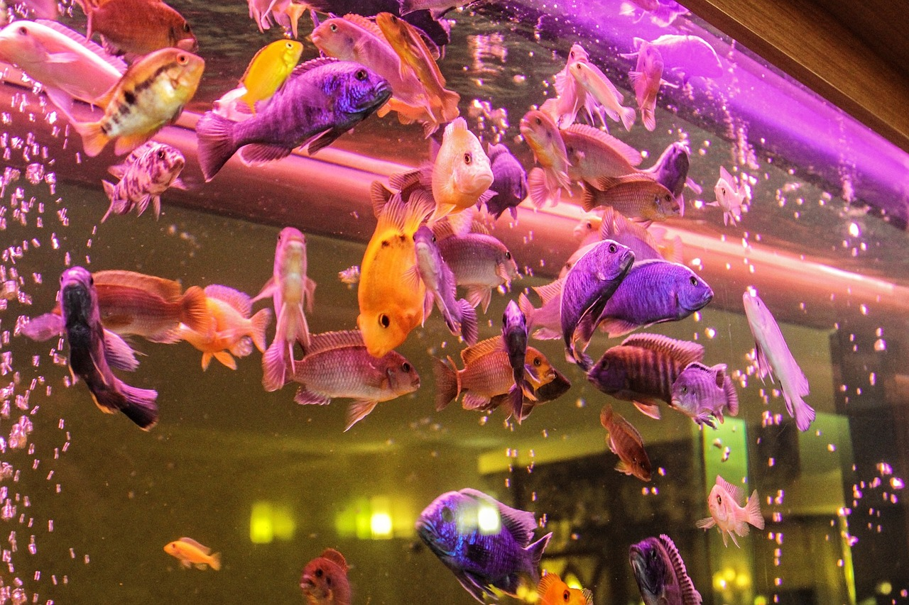 Tips on How to Move a Fish Tank to A New Home